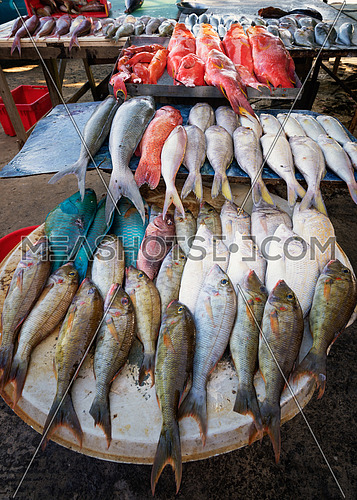 Colorful fresh tropical fish in the market,Mauritius island.