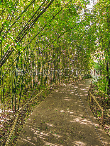 walk way shaded with Tall green bamboo shoots in a garden