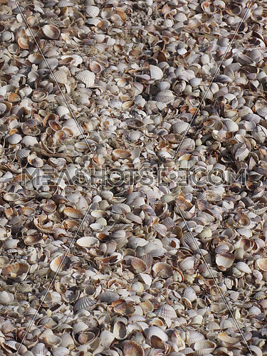 A mass amount of shells on the ground