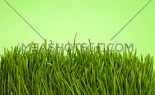 Spring fresh grass greenery close up over natural green background, low angle view