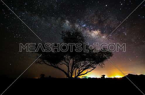 A tree in the desert showing milkyway galaxy at night