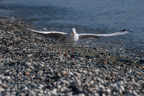 Seagull sitting on a rock on a background of blue sea