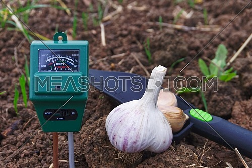 Concept of garlic autumn planting with agricultural meter to measure the moisture and pH content of the soil in a field