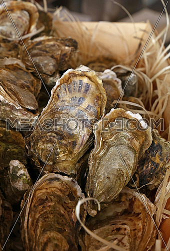 Fresh catch of raw oysters in wooden box at retail display of fisherman market, close up, high angle view