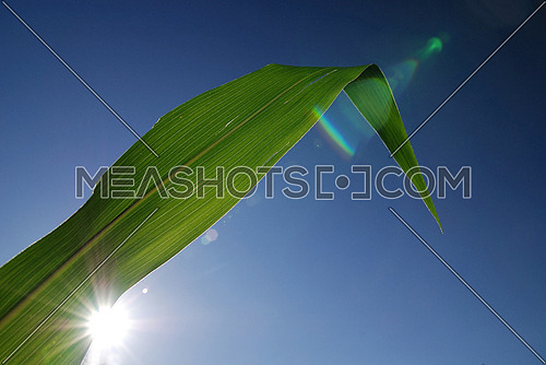 green leaf with blue sky in background                  (NIKON D80; 6.7.2007; 1/100 at f/8; ISO 100; white balance: Auto; focal length: 18 mm)