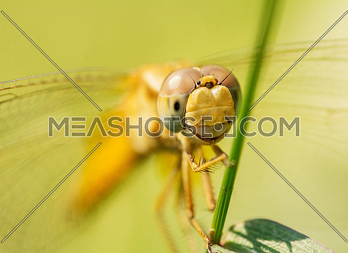 A close up shot on a Dragon Fly