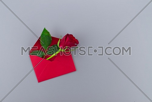 Red rose in envelope on gray background with free copy space. Wishes, greetings and love message