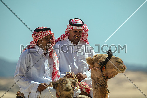 Two bediuon males riding a camels at Wadi Agarat area in Sinai at day.
