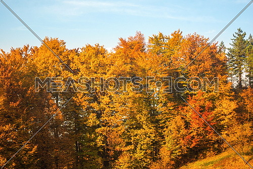 Golden beautiful autumn forest tree landscape at sunny day