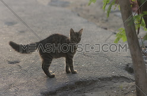 a street cat standing on asphalt ground