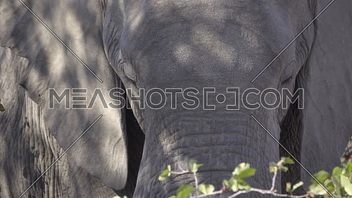 Scene of an elephants head in the shade