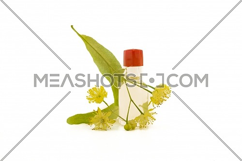 Fresh Linden or Tilia flowers and leaves with essential oil bottle in a therapeutic aromatherapy still life isolated on white background