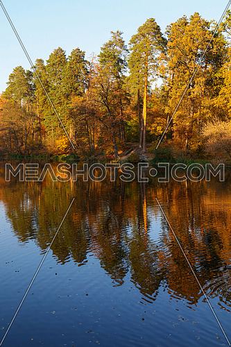 Orange and yellow autumn trees under blue sky with reflection in calm lake water surface, low angle view