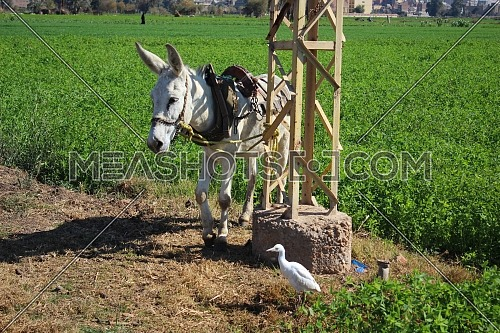 Donkey and bird standing together in front of a green field