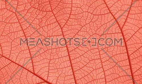 Extreme close up background texture of coral color pink toned leaf veins