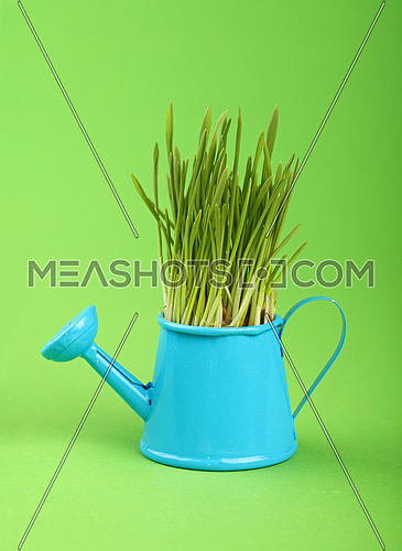 Spring fresh grass growing in small blue metal watering pot, close up over green paper background, low angle side view