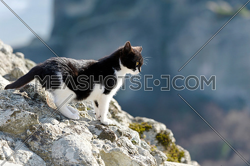 Cat outside,house cat or street cat outdoors .Wild kitten outdoor