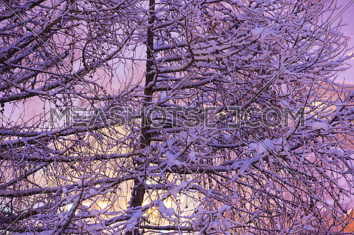 winter nature scene  tree branches covered with fresh snow sunset in background