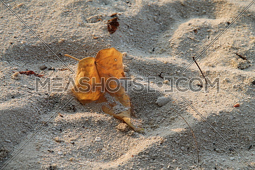 Dry leave on the beach