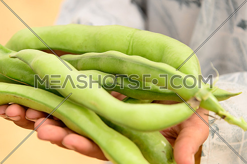 A close up shot of raw broad beans in a hand