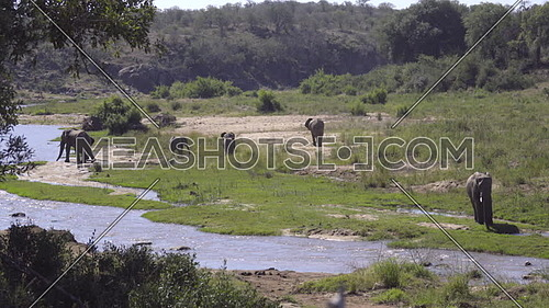 Scene of a river bank with herd of elephants