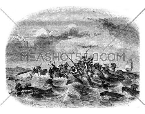 Fighting against sailors walruses, vintage engraved illustration. Magasin Pittoresque 1843.