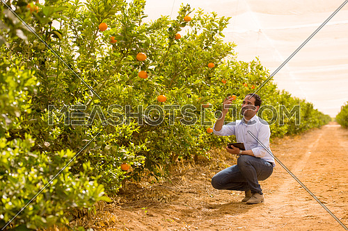 Portrait of a young middle eastern man on the farm tangerine with a smile on his face