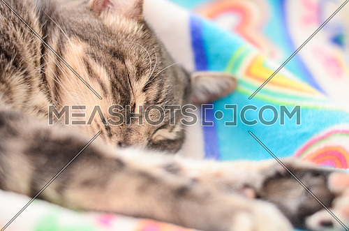 Cat sleeping on a colorful blanket with his hands stretched in front of him