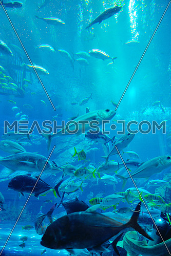 blue background ocean underwater aquarium with fishes and reef