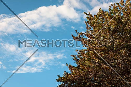 Autumn leaves with the blue sky background,Milan italy.