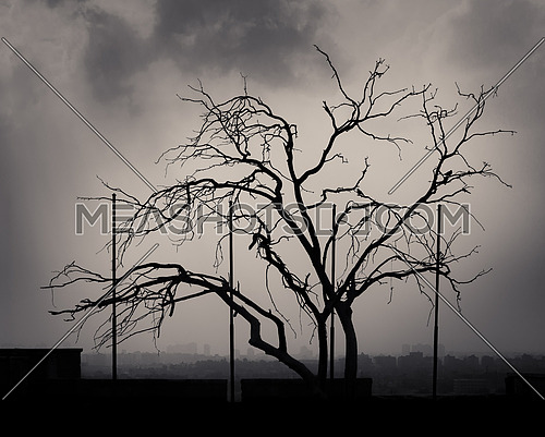 Silhouette shot of a single tree with cloudy sky at the citadel of Cairo, Egypt with skyline in the background